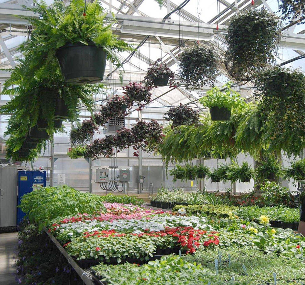 Image result for ffa plant sale