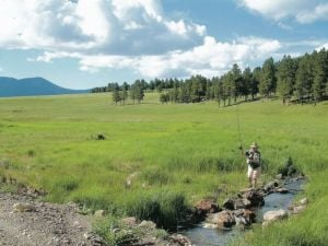 Valles Caldera Trust to allow unrestricted foot access