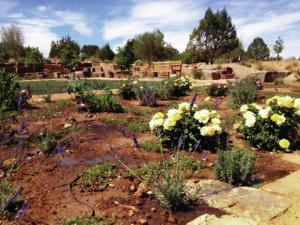 Santa Fe In Bloom Botanical Garden Opens This Month The