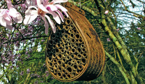 Make your garden bee-friendly