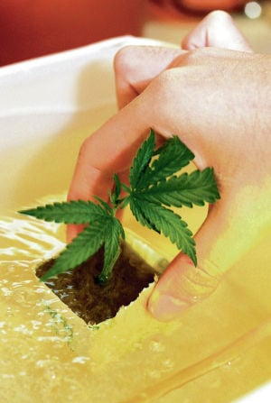 Survey: State fails to meet demand of medical pot patients