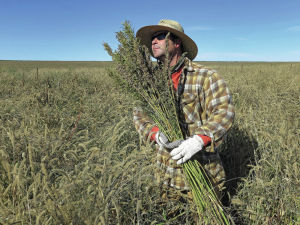 Colorado angles to expand hemp industry