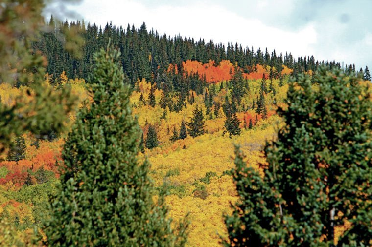 Los Alamos climate researcher discusses dire forecast for New Mexico forests