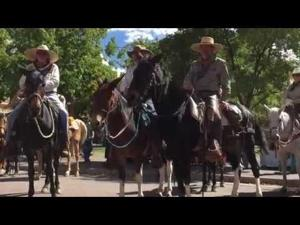 Old Guys on Mules and Horses