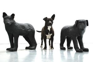 Black Dog Down