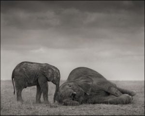 The Two Elephants