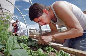 SFCC's award-winning Culinary Arts Garden helps students cultivate more than fruits, veggies