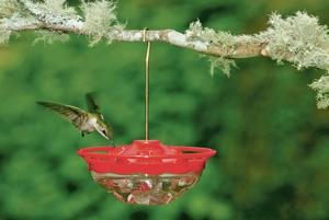 Right on time: Hummingbirds make their return