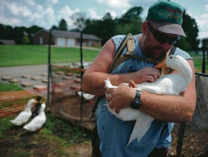 Iraq vet cited for owning 14 therapeutic pet ducks