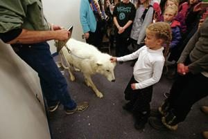 Stormy the wolf helps educate kids