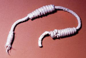 Trail Dust: Early New Mexicans used various fibers to make rope
