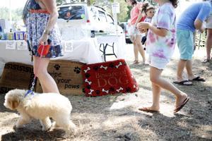 Grateful Dog festival
