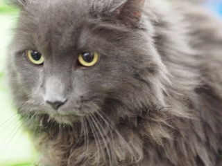 Waseca County Area Humane Society Pet of the Week - Sammie