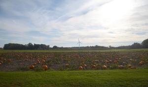 10.7 Pumpkin patch.jpg