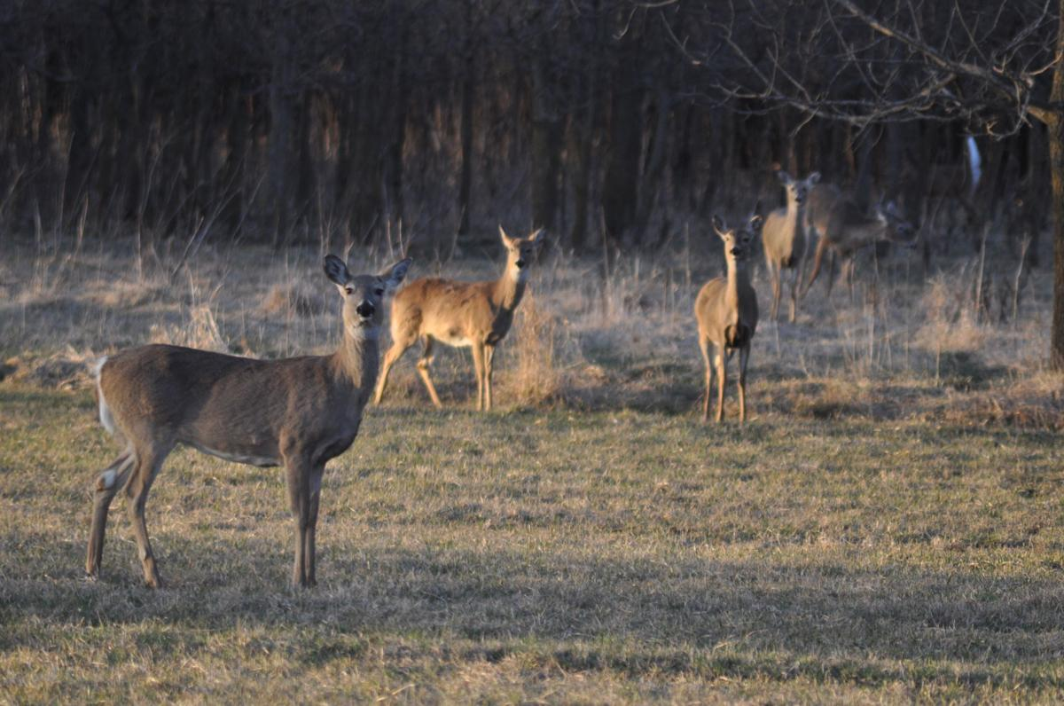 State DNR's 10-year deer management plan unveiled
