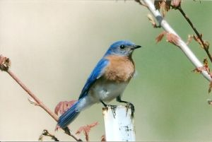 Bluebird Recovery Program of Minnesota annual expo slated for next week