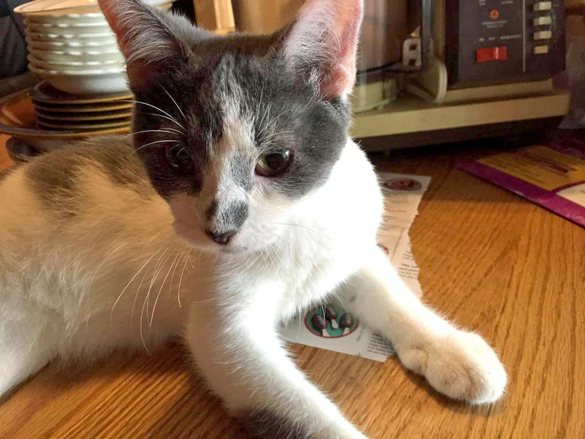 Waseca County Area Humane Society Pet of the Week - Gumdrop