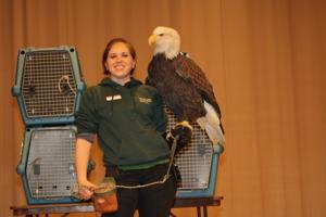 Raptor Center bald eagle at Bluebird Expo