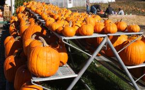 Bridgewater Produce Farm brings back Fall Festival