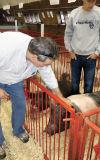 I fed Elvis at the Steele County Free Fair