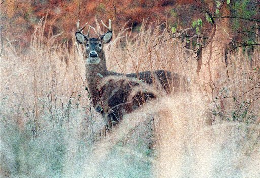 Young hunters in missouri kill record number of deer news for Missouri fishing license age