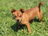 Pet of the Week: Jeezy, a Chihuahua mix