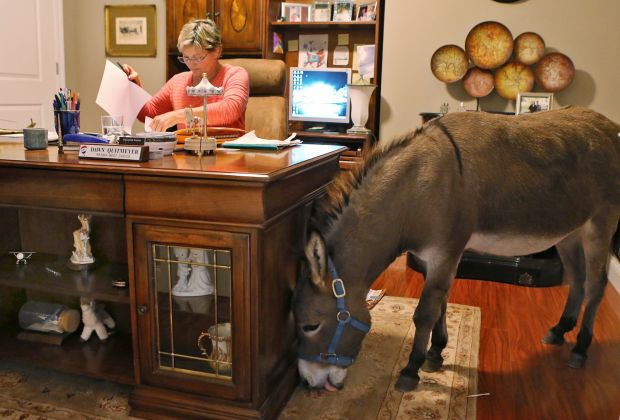 Joplin The Donkey Is Part Of The Family Gallery