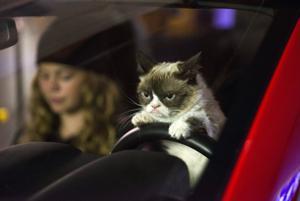 Gail Pennington: Grumpy Cat stars in holiday movie