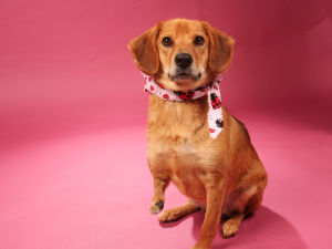 Dog Of The Week: Meet Carlie