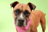 Dog of the Week: Meet Ash