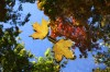 September rain plus October chill may resurrect fall colors in St. Louis