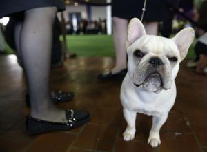 Vying to be the top dog at Westminster