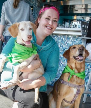 iParty: Dog Days of Summer helps Stray Rescue