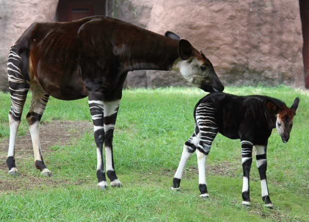 Broker jobs london zoo