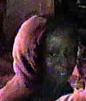 St. Louis police release surveillance photos of theft suspects after police shooting