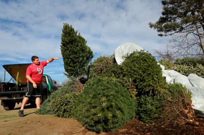 Christmas tree recycling offered throughout the St. Louis region : News