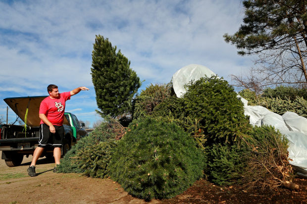 Christmas Tree Recycling Uttlesford : Christmas tree recycling offered throughout the st louis