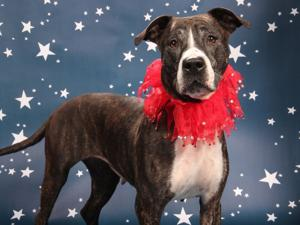 Dog of the week: Meet Chanel