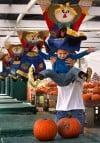 Pumpkins are plentiful