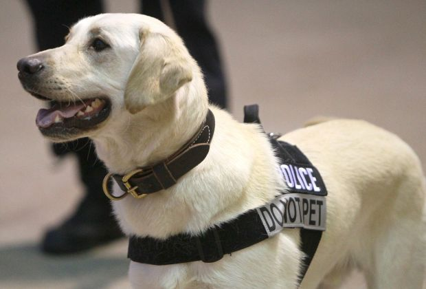 fans  friend cardinals buy donate special bomb sniffing dogs sports