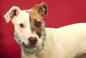 Pet of the Week: Meet Evie