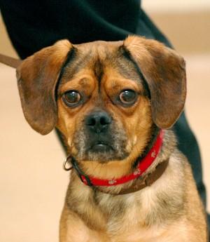 St Charles Dog Adoption Center