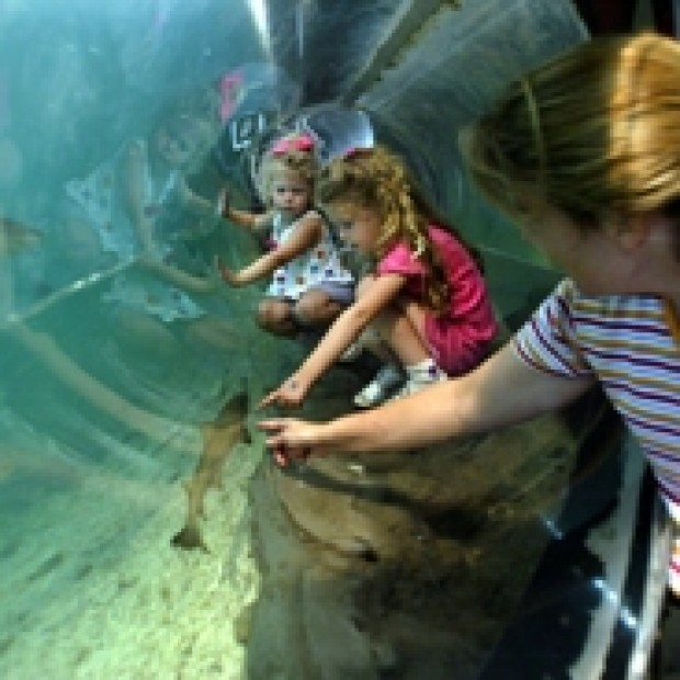 World Aquarium In Downtown Cited For Dirty Facility And