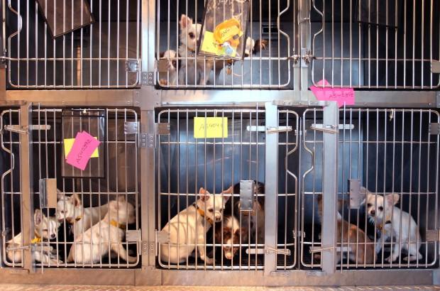 Johnson County Dog Rescue