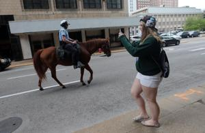 St. Louis police expanding use of mounted patrol