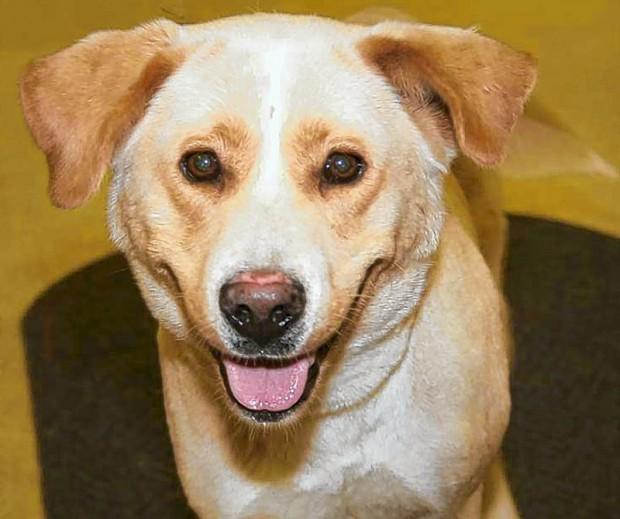 Apa Of Missouri Adoptable Dogs