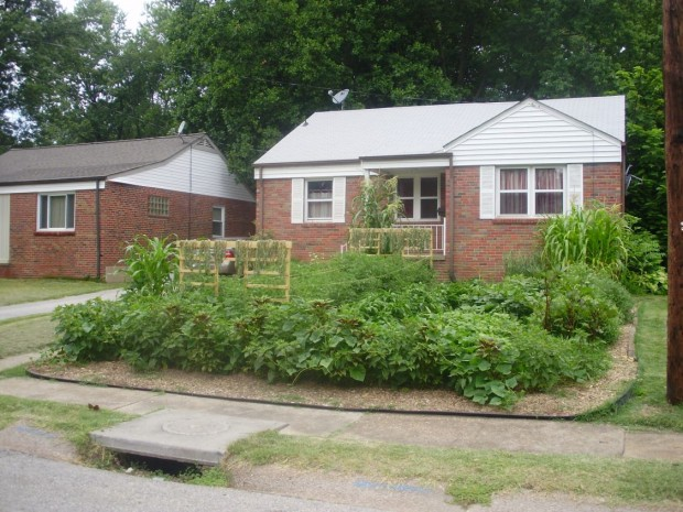 Karl Tricamo's garden in Ferguson on July 12