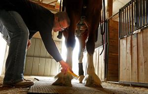 Would you like to bid on a Clydesdale?