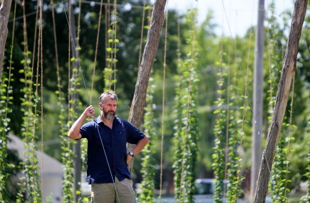 hops become new cash crop as craft brewing grows   business