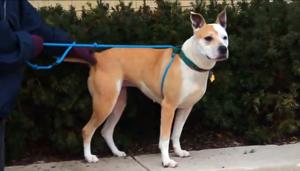 Dog of the week: Meet Aeeriel
